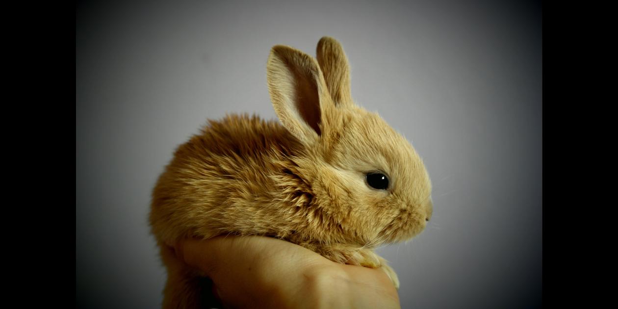 Bunny Header