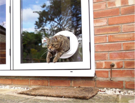 cat going outside in the garden using a cat flap