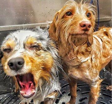 Dog wash image