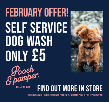 Dog Wash Offer