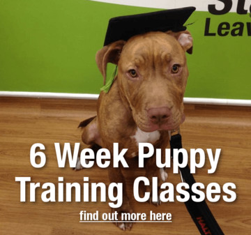 6 Week Puppy Training Classes