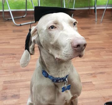 Graduated puppy 1