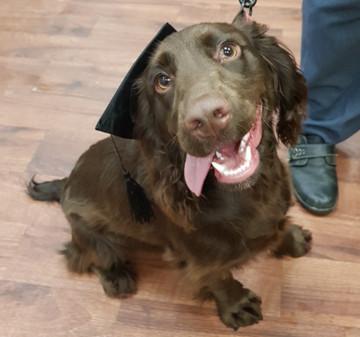 Graduated puppy 3