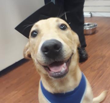 Graduated puppy 4