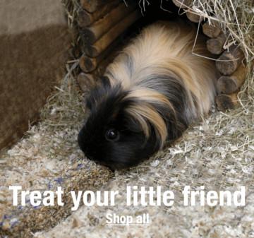 Small Pet Treats