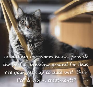 Flea & Worm Treatments