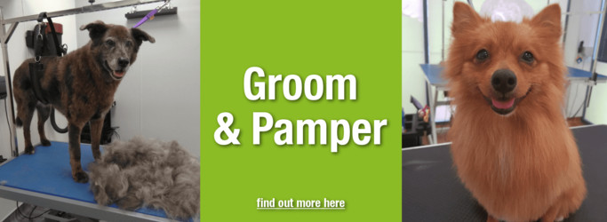 Groom & Pamper Studio