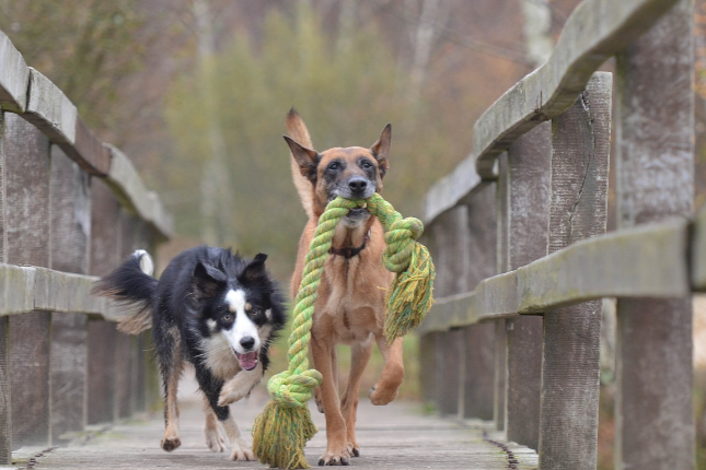 Fun Things To Do With Your Dogs & Kids Over The Holidays