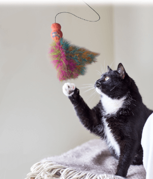 Kennelgate Pet Superstores Online Pet Food & Pet Accessories