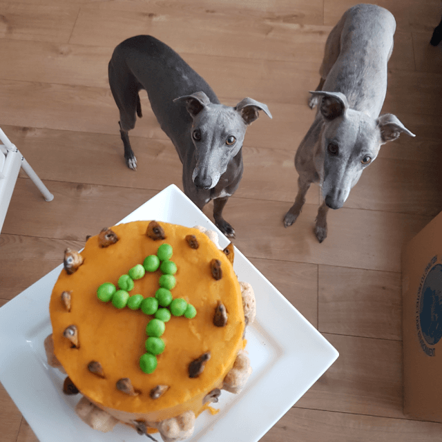 Easy Delicious Dog Birthday Cake Recipe Kennelgate News