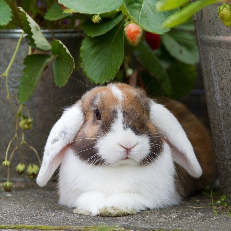 Rabbit in the Garden