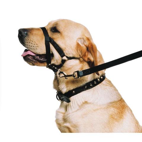 Nylon Dog Halter In Black Size 5-6