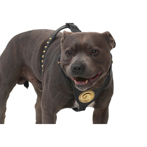 Ancol Deluxe Bull Terrier Leather Black Dog Harness
