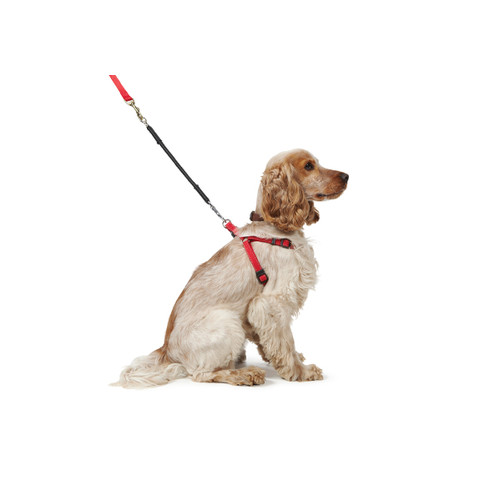 Ancol Bungee Shock Absorber For Dog Lead