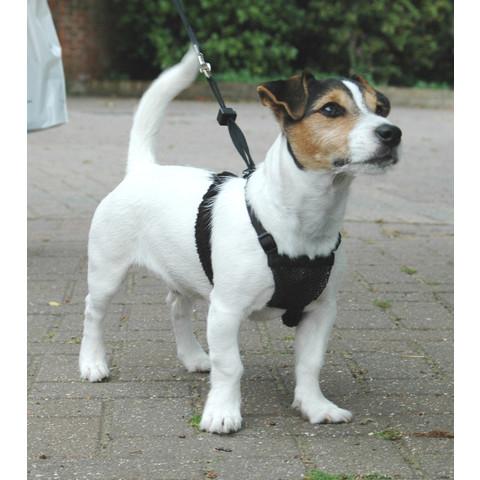 The Company Of Animals Black Non-pull Dog Harness Small