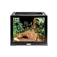 Komodo Crested Gecko Starter Kit