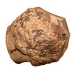 Anco Roots Durable Chew Dog Treat Large