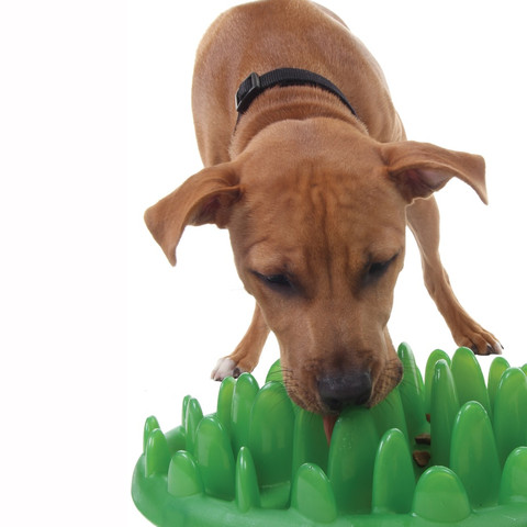 The Company Of Animals Green Slow Feed Dog Bowl