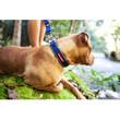 Ezy Dog Blue Neo Dog Collar Medium