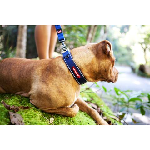 Ezy Dog Blue Neo Dog Collar Large