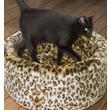 "Danish Design Cosy Cat Leopard Print Bed 20""/50cm"