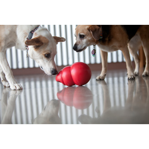 Kong Bounzer Dog Toy Large