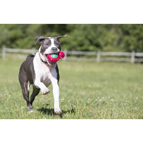 Kong Tennis Pals Lamb Dog Toy Large