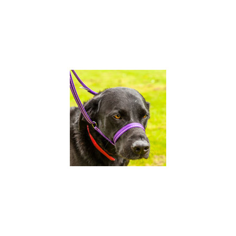 Gencon All-in-one Clip To Collar Black Head Collar And Lead