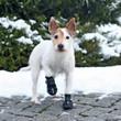 Trixie Walker Protective Active Dog Boots M-l