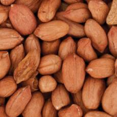 Walter Harrisons Wild Bird Peanut Kernels 25kg
