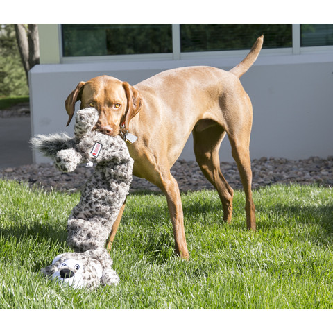Kong Stretchezz Tiger Dog Toy Jumbo