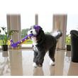 Kong Ballistic Flatz Giraffe Stuffing Free Dog Toy Large