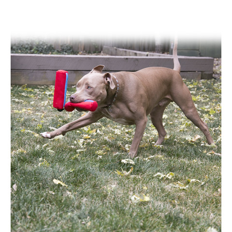 (d)kong Champz Chucks Dog Toy