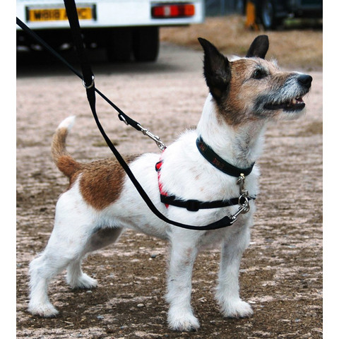 The Company Of Animals Halti Dog Harness Small To Large