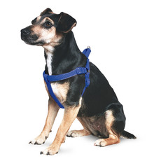 Ancol Nylon Padded Exercise Blue Dog Harness Small To X Large