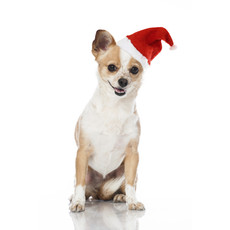 Armitage Good Boy Pawsley Christmas Santa Hat Dress Up For Dogs