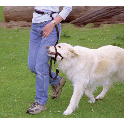 The Company Of Animals Halti Training Dog Lead Small To Large