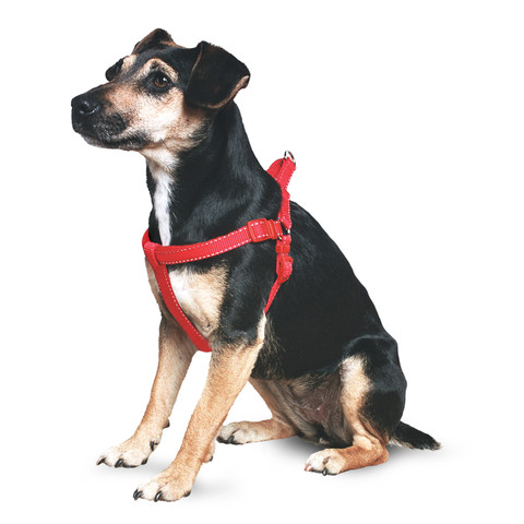 Padded Nylon Harness Red Xs Small To X Large