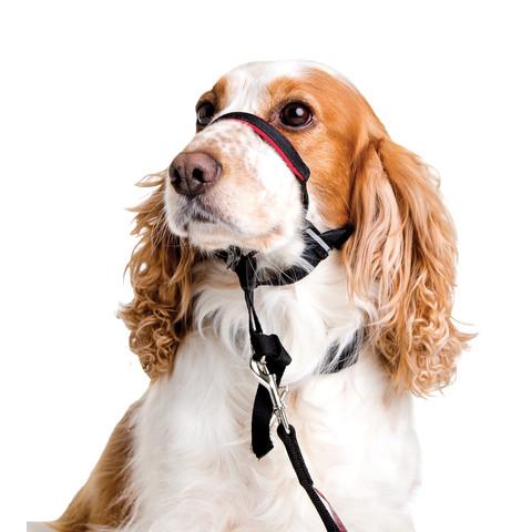 The Company Of Animals Halti Optifit Headcollar For Dogs Medium