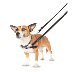 The Company Of Animals Halti Front Control Dog Harness Small To Large