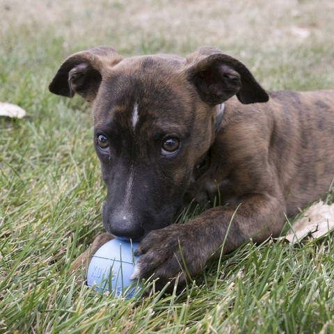 Kong Puppy Ball With Hole Med/lge