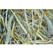 Supreme Selective Timothy Hay For Small Animals 4 X 400g